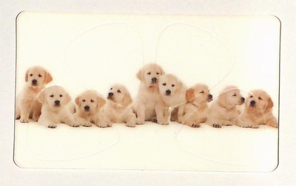 Pickcard plectrum kaart puppys